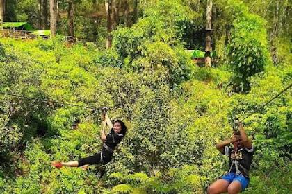 Wisata Pepohonan di Bandung