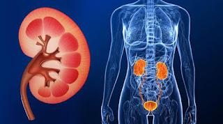 Apa Saja Penyebab Dan Ciri - Ciri dari Penyakit Gagal Ginjal
