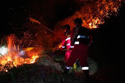 45 Hektare Lahan di Kawasan Danau Toba Terbakar, Pemadaman Terkendala Angin Kencang