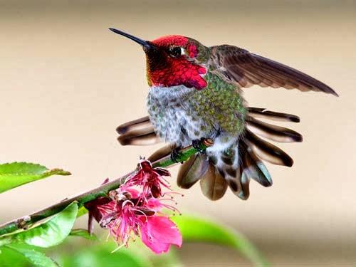 تعرفوا بالصور على ارق واصغر طائر