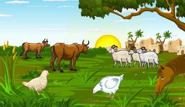 دور البيئة في حياة الحيوان