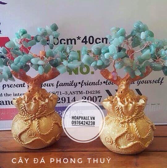 Cay da phong thuy tai Quan Tay Ho