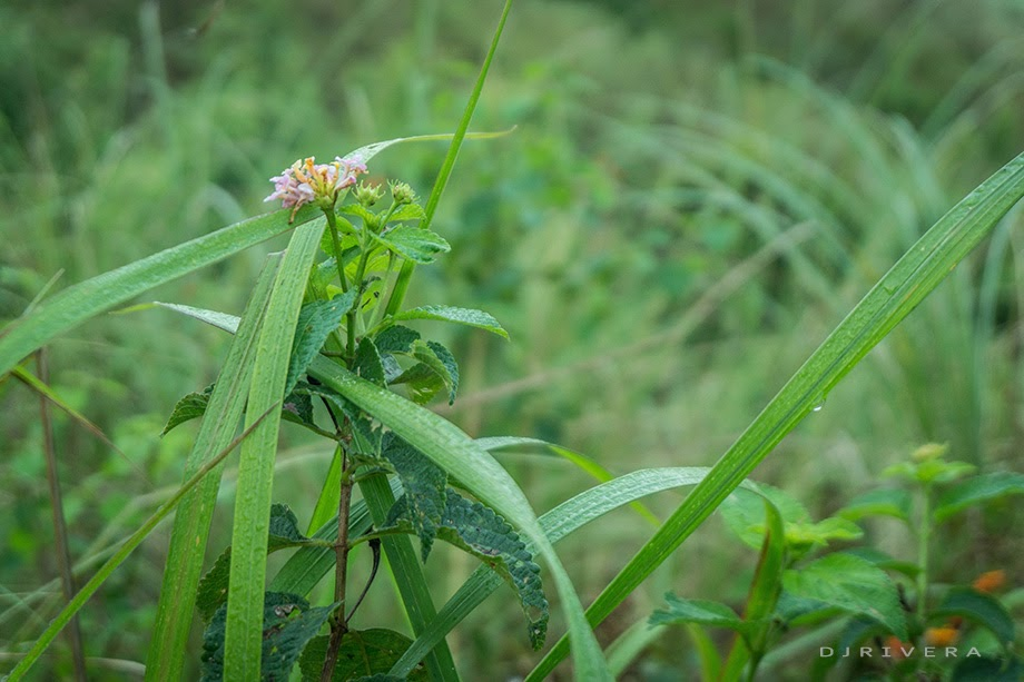 Close-up shot Maynoba's flora