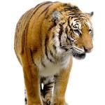 Persebaran Fauna di Dunia menurut Wallace Lengkap Contoh