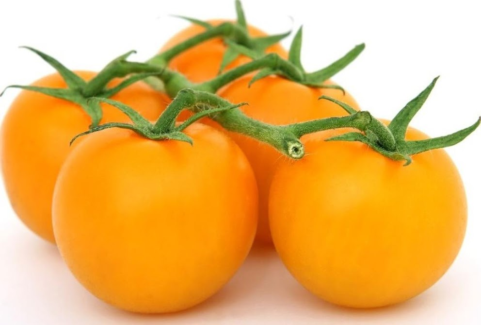 Benih Bibit Biji Tomat Golden Jubilee Tomato Bibit Unggul Sumatra Selatan