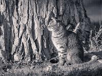 Tierportrait Katze Tierheim Tonung S/W fotografiert von Michael Schalansky