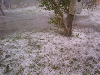 Chuva forte com vento causou queda de arvores e granizo em Iguape