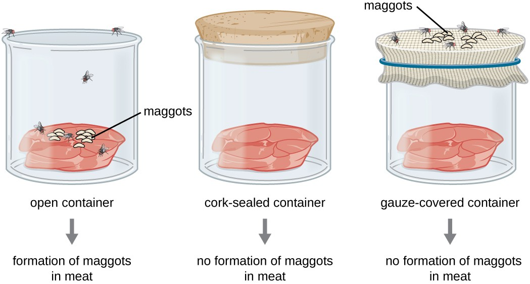 Concept of Spontaneous Generation and Biogenesis