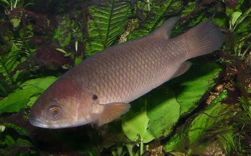Aquarium Fish Name Kerala Aquarium Fish Guppy Rs6 Only We Have