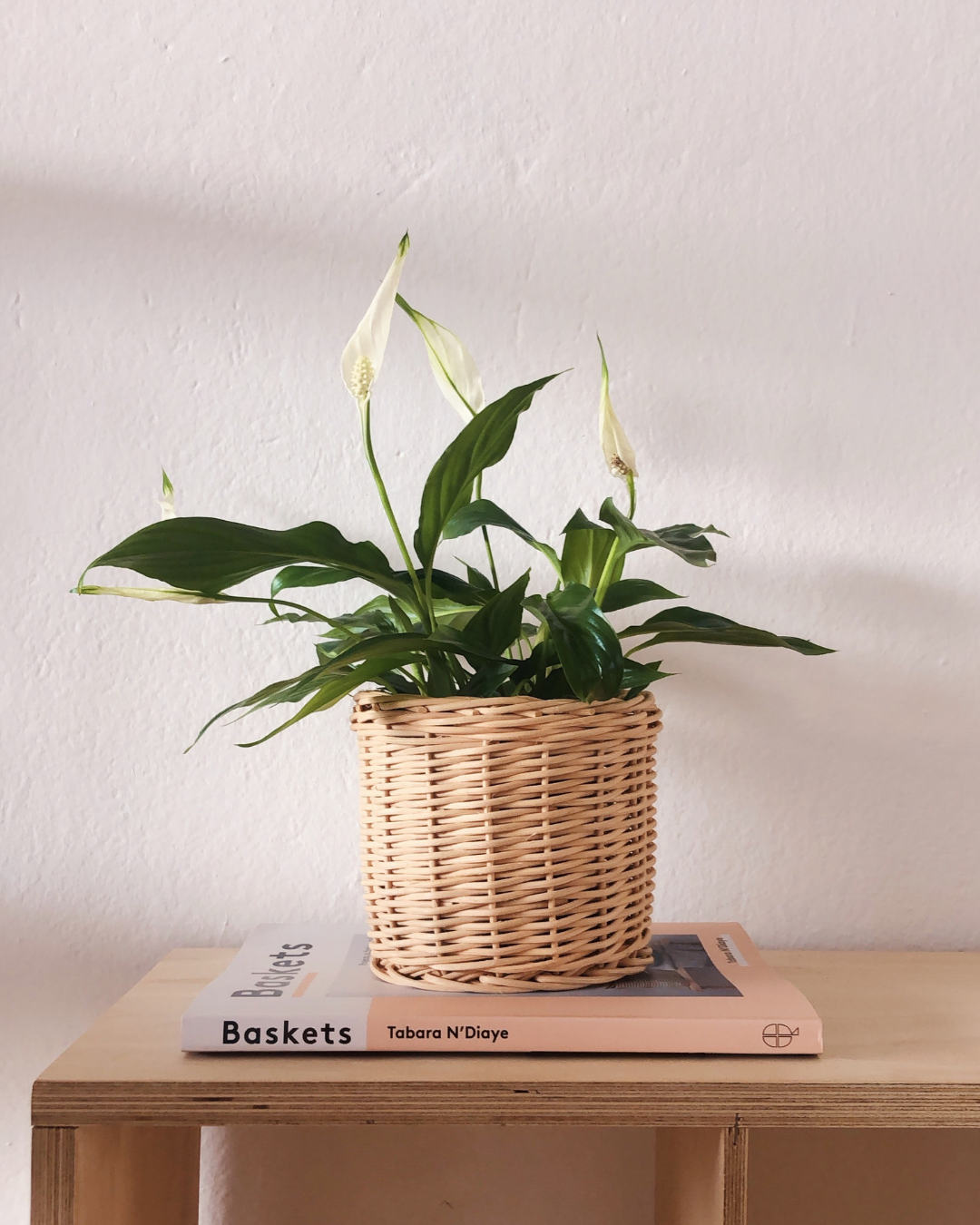 blog, love improchori, api little darling, peace lily, rattan, basket