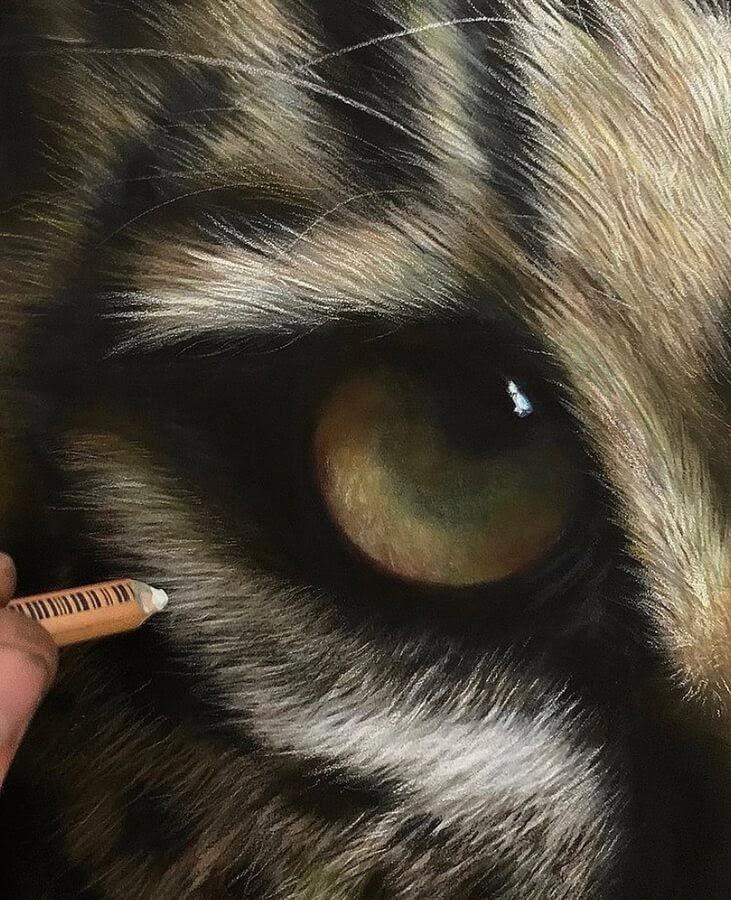 11-Jaguar-eye-Paul-Miller-www-designstack-co