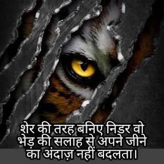 LION STATUS SHAYARI
