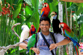 All About Bali Bird Park The Beauty And Diversity