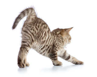 Cats need exercise to be physically and mentally fit