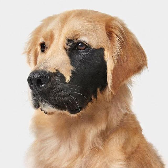Perro nació con marca en la cara