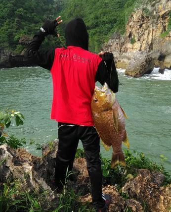Tips Mancing Ikan Kampur  (Karangan) ikan kampo  ikan kampuh ikan sanganging