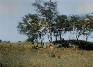 peninggalan buddha kuno di reuzenvlakte dekat padang lawas