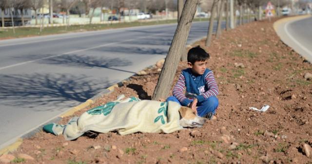 Маленький Сирийский Беженец Не Оставил Раненую Собаку До Самого Конца