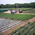 Vegetable Planting Plan
