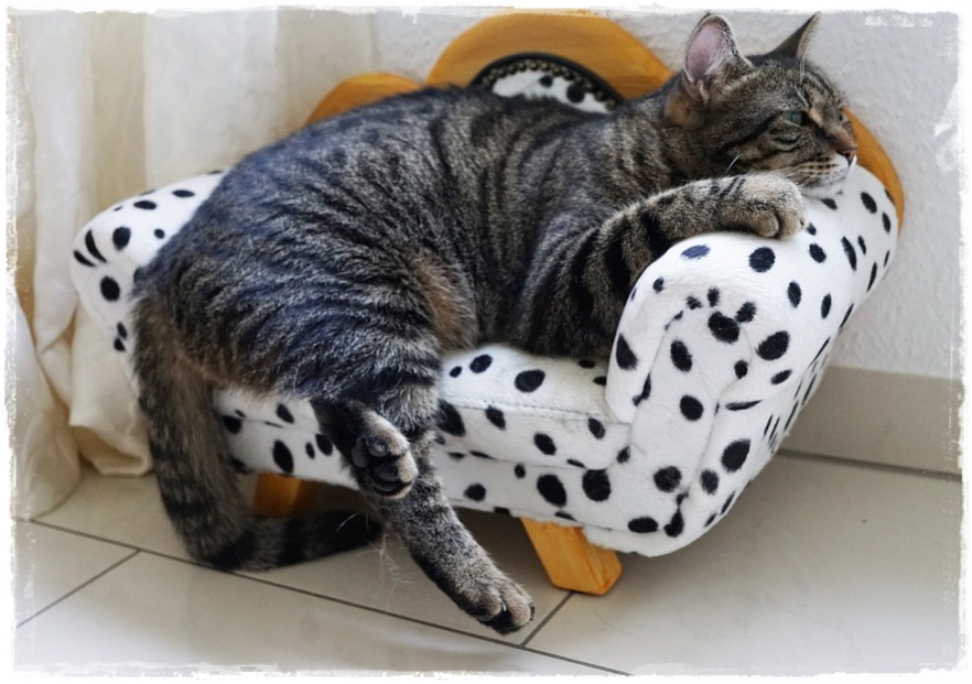 Ciri-Ciri Kucing Sedang Sakit
