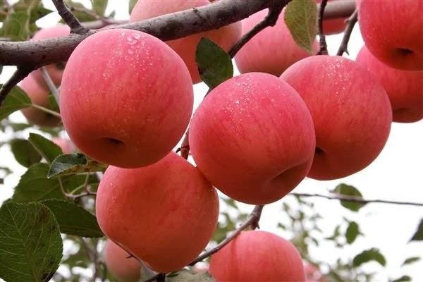 Perhatian Peminat Buah Epal! Ruginya Kalau Kita Kupas Dan Buang Kulit Epal, Ini Sebabnya...