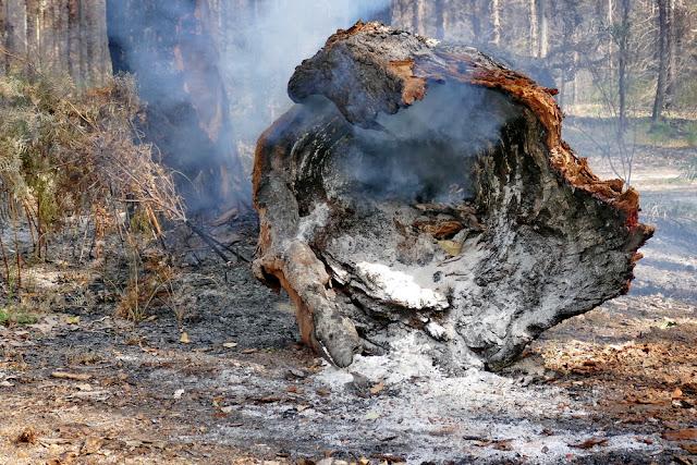 Brand, Feuer, Baum, Baum-Riese, Waldbrand