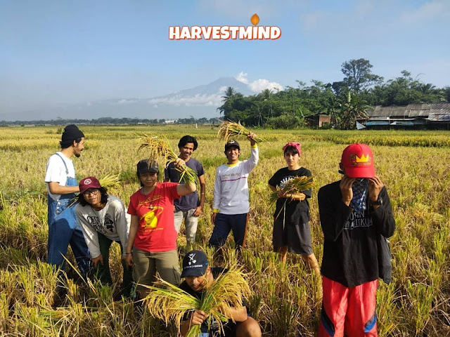 harvestmind