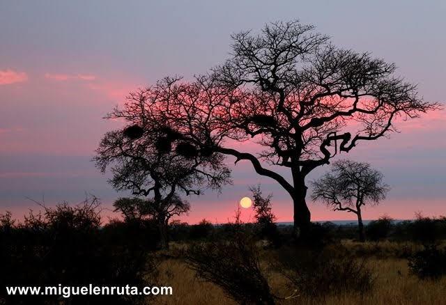 Amanecer-Satara-Kruger