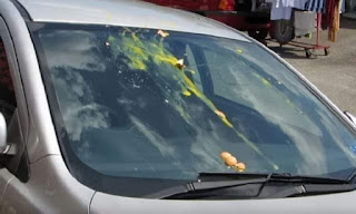 Jangan Salah Langkah !! Ini Tindakan Yang Dilakukan Jika Kaca Mobil Dilempari Telur