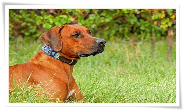 types of dog collars explained