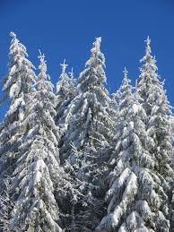 How to keep healthy in winter?