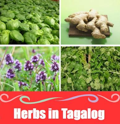 Herbs Word List in Tagalog