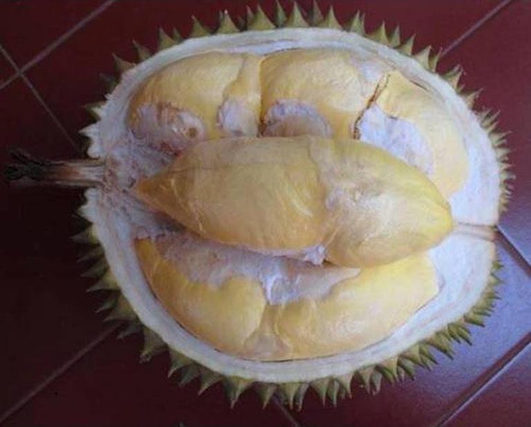 bibit tanaman buah durian bawor kaki 3 Tarakan