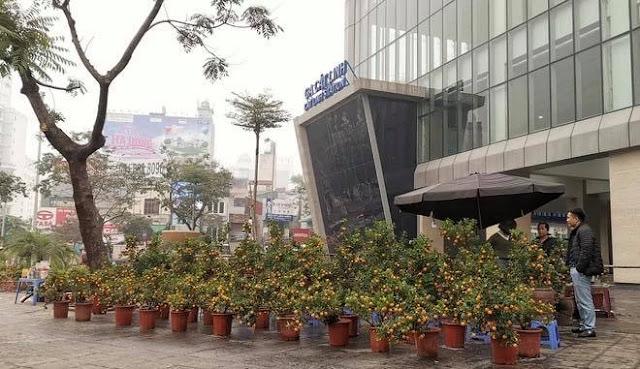 Nhà ga Cát Linh - Hà Đông bị bỏ hoang, trở thành chợ cây cảnh Tết