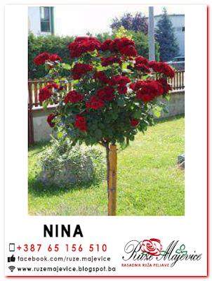 Crvena stablačica Nina