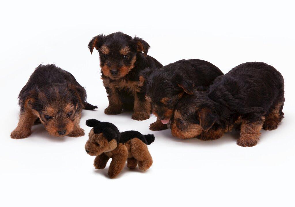 Smart Interactive Dog Toys