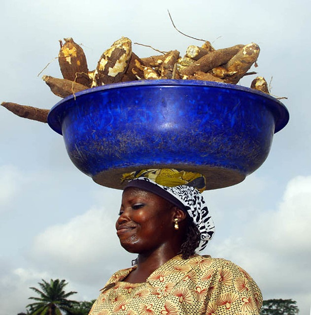 Woman carrying bowl of harvested cassava roots.