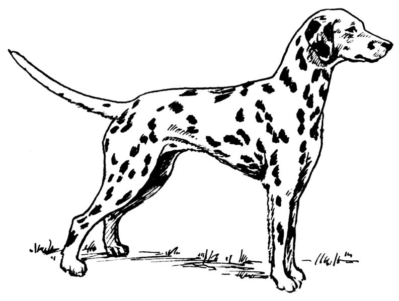 Dibujo De Un Perro Para Colorear Affordable Dibujo De Un Perro 3: Dibujos De Perros Dalmatas Para Imprimir
