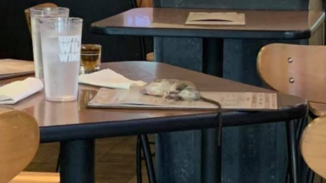 Ζωντανός αρουραίος προσγειώθηκε στο τραπέζι πελάτισσας (pics)