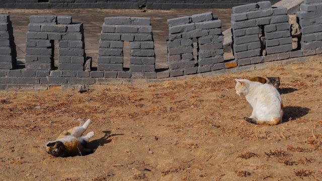 kucing di china