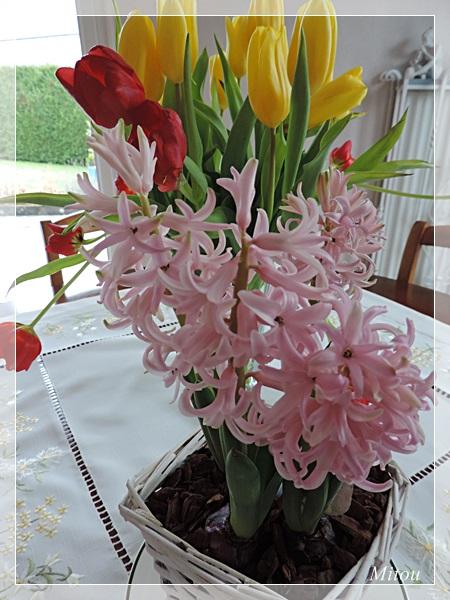 Mitou la bretonne a la recherche du printemps for Garder un amaryllis
