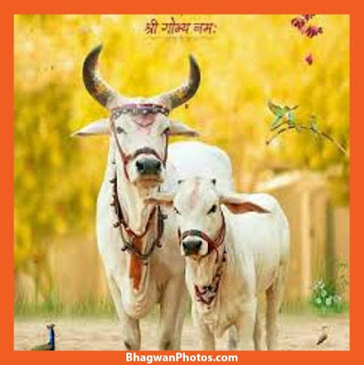 Gau Mata Image Full Hd