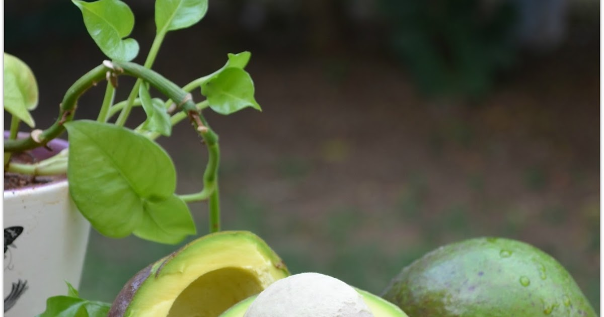 how to eat avocado in tamil