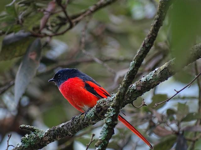 Birds of Pangot