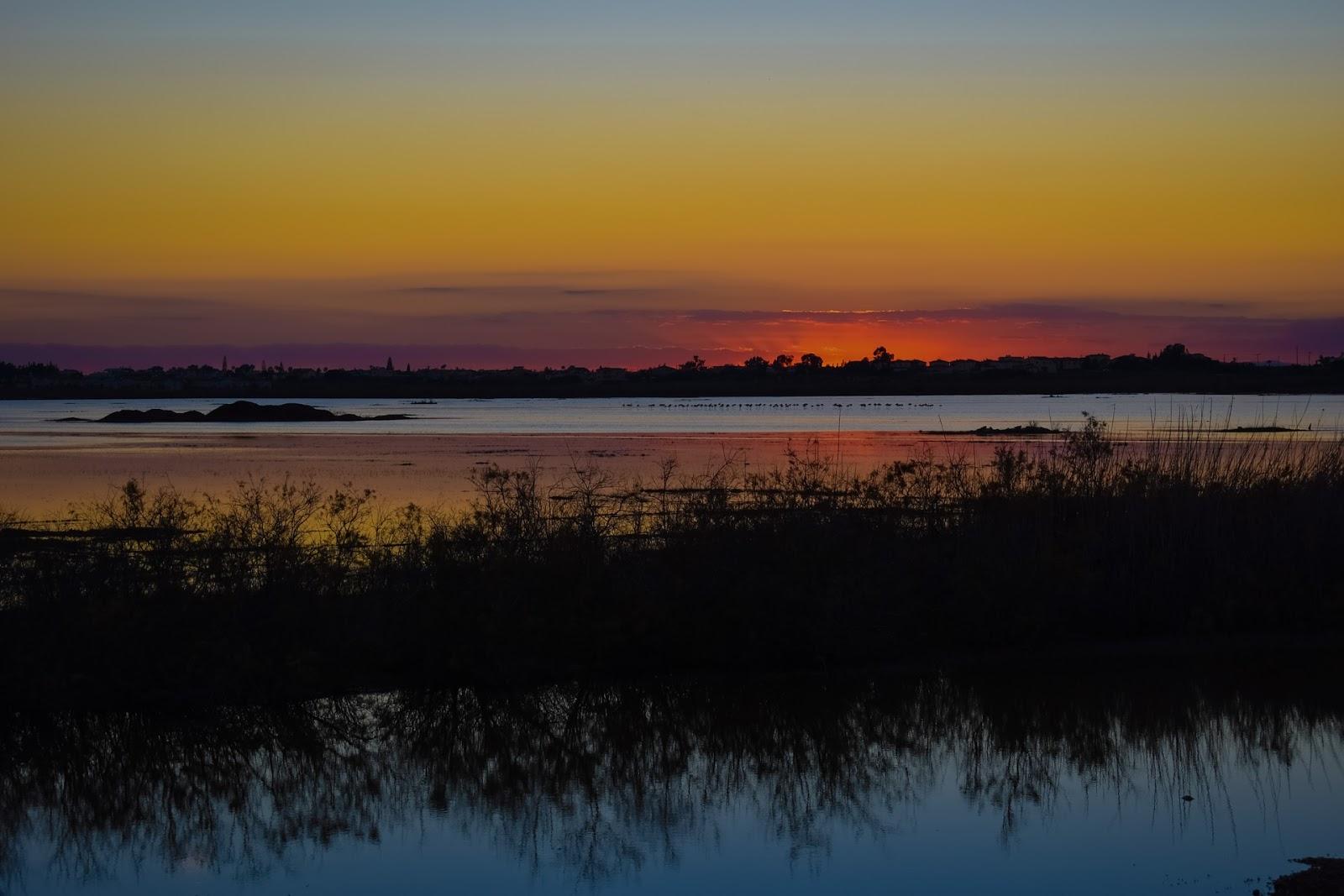 Lago Sazonal Pantanal Pôr Do Sol Aves Migratórias