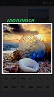 655 слов на берегу лежит моллюск с раковиной 18 уровень