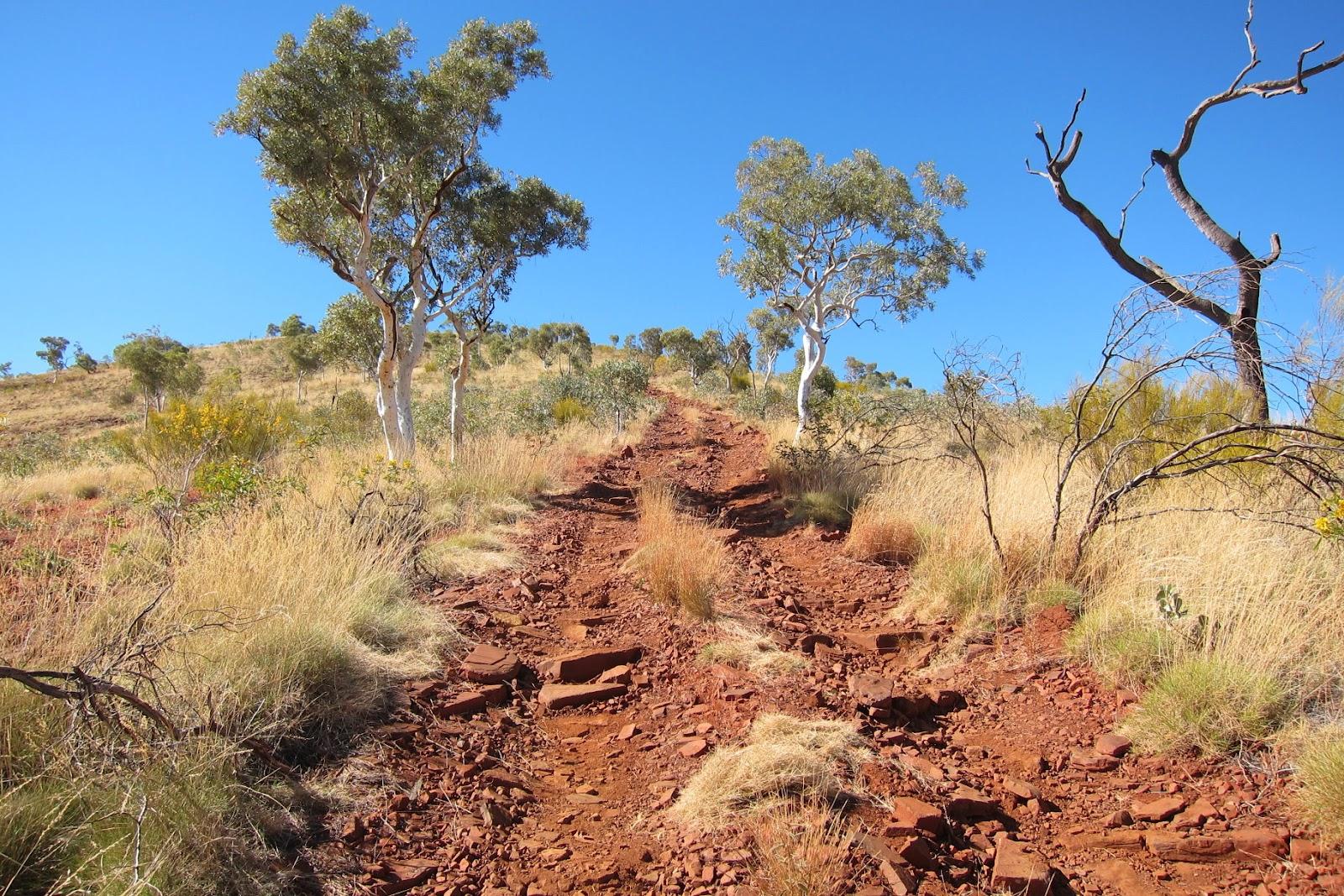 Mountains mt meharry wa australia for Garden design under gum trees