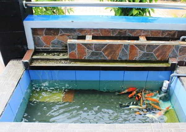 Contoh Desain Kolam Ikan Minimalis