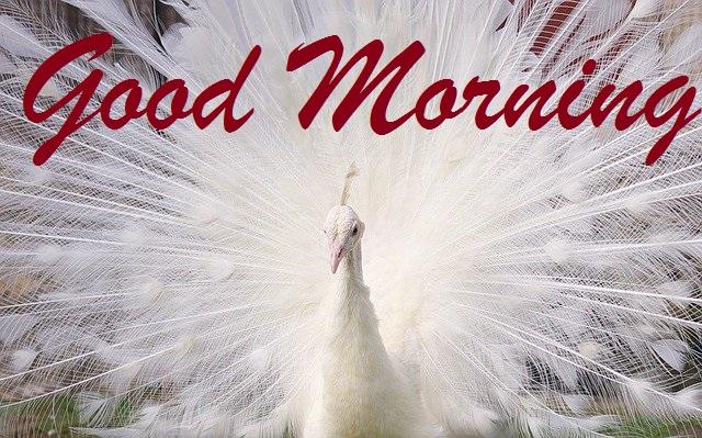 Beautiful good morning bird