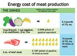 energy cost of meat production versus vegetables